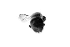 EmmanuelCollege_MollieSalamon_Pollinator-4